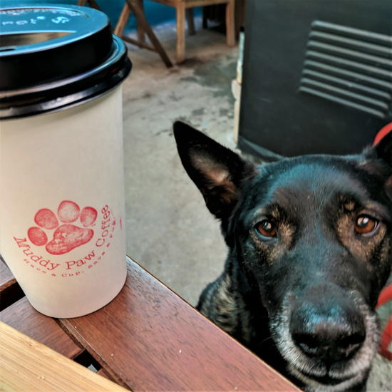 Muddy Paw Coffee - Dog friendly patio (Foodzooka)