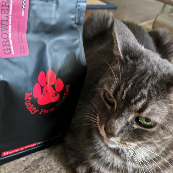 Muddy Paw Coffee - Growler coffee (Foodzooka)
