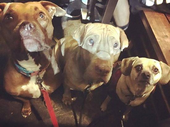 Muddy Paw Coffee (courtesy) - La Borie rescue dogs - Maple, Santana, Abby